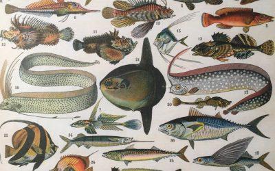 2 – L'aquarium – Jacques Rebotier